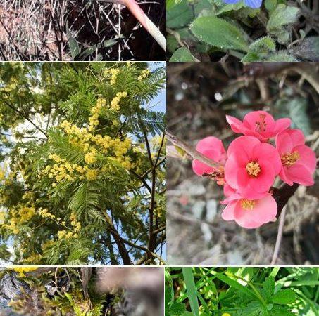 Fleurs printemps vitalité Isabelle Friedel Sophrologue